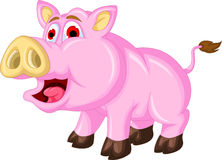 Pig cartoon  isolated Stock Photography