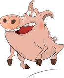 Pig. Cartoon Royalty Free Stock Photography