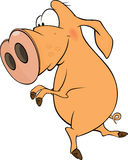 Pig. Cartoon Stock Image