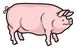 Pig. A cartoon pig on a white background vector illustration