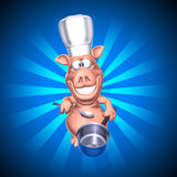 Pig chef Stock Photos