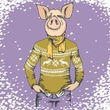 Pig Christmas and New Year vector concept royalty free illustration