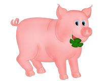 Pig with clover Royalty Free Stock Image
