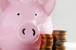 Pig and coins Stock Photos