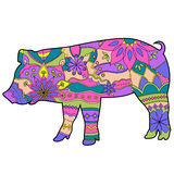Pig colorful Stock Photos