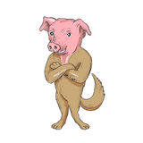 Pig Dog Standing Arms Crossed Cartoon Royalty Free Stock Photo