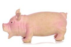 Pig dog toy. Studio cutout stock image