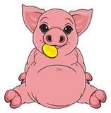 Pig with dollar Stock Photos