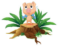 A pig exercising above the stump Royalty Free Stock Image