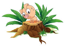 A pig exercising above a tree Stock Image