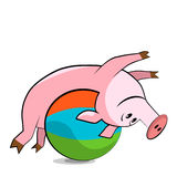 Pig exercising with a pilates ball. Royalty Free Stock Images