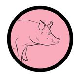 Pig Face Closeup Vector. Design Royalty Free Stock Photo