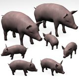 Pig family Royalty Free Stock Image