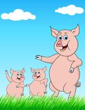 Pig family cartoon Stock Images