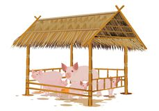 The pig family in corral. Design Stock Images