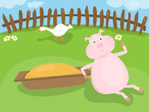 Pig on a farm Stock Images