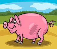 Pig farm animal cartoon illustration Royalty Free Stock Photography