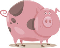 Pig farm animal cartoon illustration Stock Photos