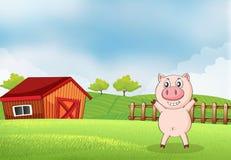 A pig in the farm with a barn Stock Photos
