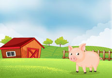 A pig in the farm with barn Stock Photography