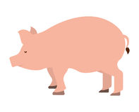 pig farm isolated icon design Royalty Free Stock Images
