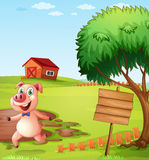 A pig in the farm near the empty signboard Stock Photography