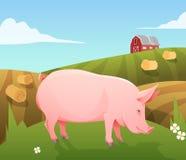 Pig on farm Stock Photos