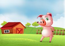 A pig at the farm pointing the barn house Royalty Free Stock Photos