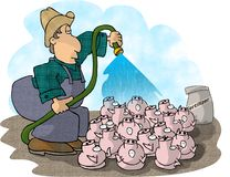 Pig Farmer Stock Photo