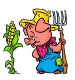 Pig farmer harvest corn cartoon Stock Images