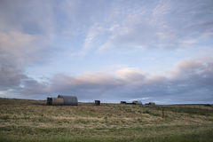 Pig farming on South Downs in Sussex landscape Royalty Free Stock Photo