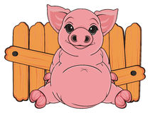 Pig and fence Stock Image