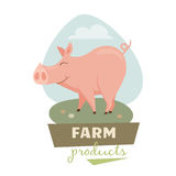 Pig on field Royalty Free Stock Photos