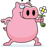 Pig Flower Stock Photo