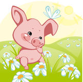 Pig on a flower meadow. Stock Photos