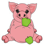 Pig with food Stock Images