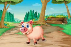 A pig at the forest Stock Photography