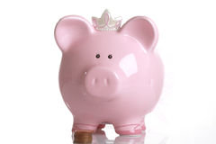 Pig fund Royalty Free Stock Photos