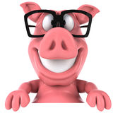 Pig and glasses Stock Photography
