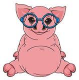 Pig in glasses Stock Photo