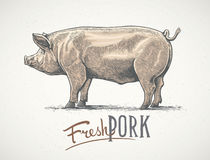 Pig in graphic style. vector illustration