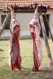 Pig halves hanging in a backyard Stock Photos