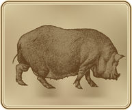 Pig, hand drawing vector illustration. Stock Photos