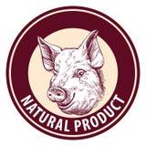 Pig hand drawn vector llustration sketch. logo design template. farm Stock Photography