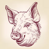 Pig hand drawn vector llustration sketch Royalty Free Stock Photo