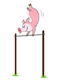 Pig hangs on a horizontal bar Stock Images