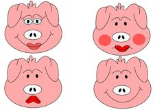 Pig head Stock Photos