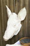 Pig head Stock Photo