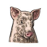 Pig head isolated on white background. vector illustration