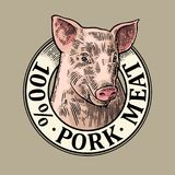 Pig head. 100 percent pork meat lettering. Vintage vector engraving. Pig head. 100 percent pork meat lettering. Hand drawn in a graphic style. Vintage color royalty free illustration